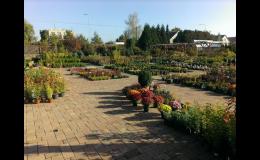 Výhodný prodej ovocných dřevin přímo z okrasného zahradnictví