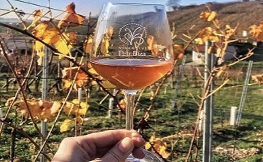 Řízené degustace vína v rodinném vinařství