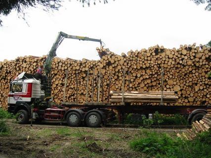 Přeprava dřevní hmoty moderními nákladními vozy