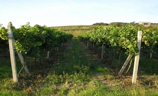 Vinařská obec