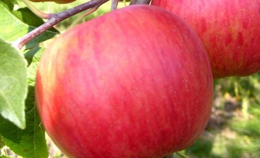 Ovocnářství, sady