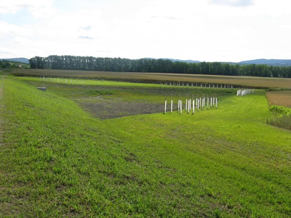 projekty, výsadby krajinné zeleně
