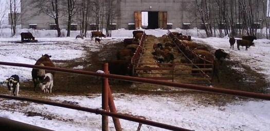 Jan Hořák - Zemědělská farma