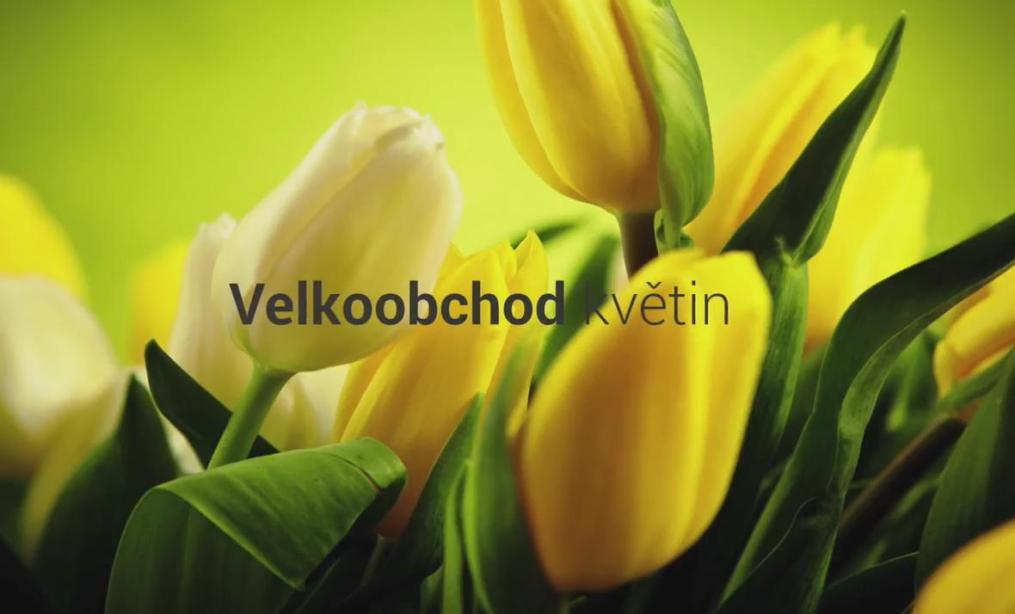 KLIA cz s.r.o. Velkoobchod květiny