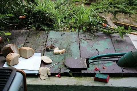 Deratizace - hubení hmyzu a hlodavců