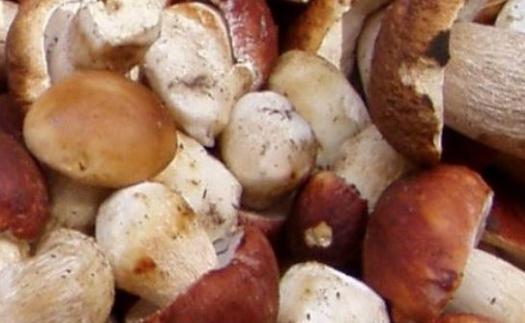 Široká nabídka hub