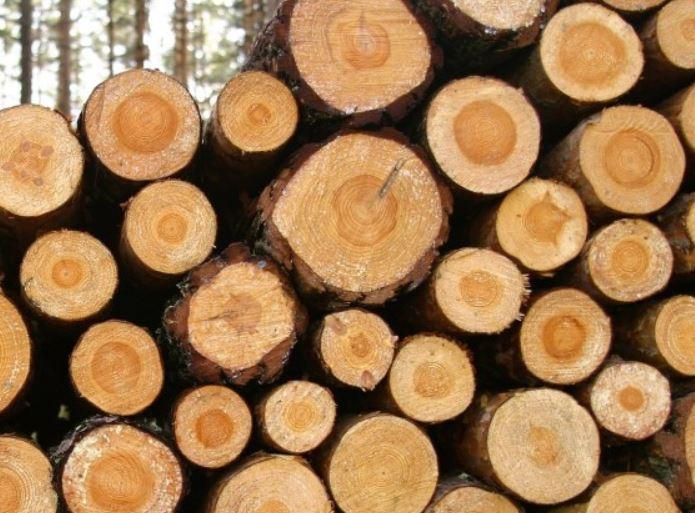 Lesnictví, těžba a zpracování dřeva -  Jan Sečkař