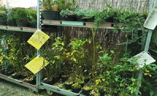 Letničky, trvalky, ovocné stromy - prodej ve Znojmě