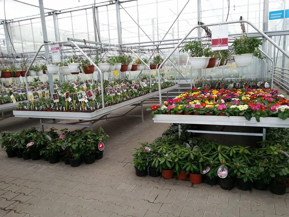 Zahradní, balkonové a pokojové rostliny Mělník