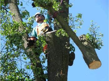 Údržba stromů, SPANTIK Radek Žemlička