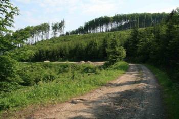 Lesnictví, Foresta SG, a.s. Lesní poradenství
