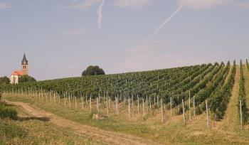 Vinice, Rodinn� vina�stv�  Rakvice - Vinopa Ing.Milo� Vesel� CSc.