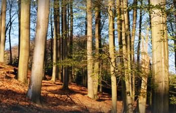 Dotace na lesnictví Vsetín, Foresta SG, a.s. Dotace na lesnictví