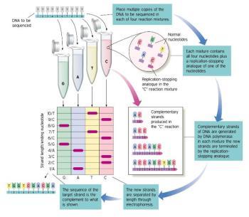 Schéma syntézy DNA, Biogen Praha, s.r.o. Molekulární biologie a genetika Praha