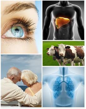 Aktivn� farmaceutick� substance na b�zi prostaglandin�, Cayman Pharma s.r.o.