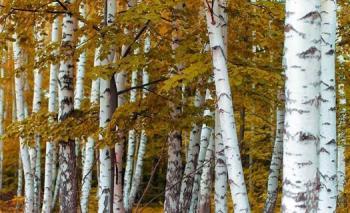 Výzkumná organizace, IFER - Ústav pro výzkum lesních ekosystémů, s.r.o.