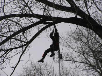Kácení a ošetřování stromů, Vladimír Bodlák - Kácení stromů