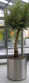 Matous Hydroponie s.r.o. Zelena stena, vertikalni zahrada