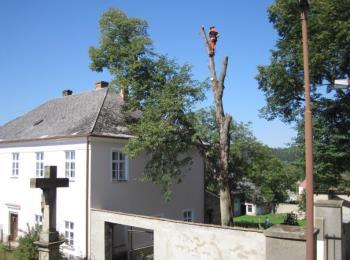 Rizikové kácení stromů cena