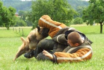 V�cvik obran slu�ebn� kynologie - v�cvik ps�, psovod�, kon�, zv��at, HUSPOL group s.r.o.