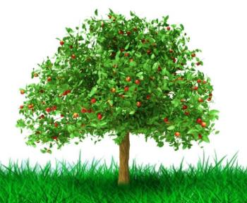 Pěstování a prodej jablek, Miloš Thoř - Ovocnářská farma