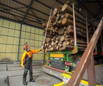 Výroba buničiny ze smrkového dřeva, Lenzing Biocel Paskov a.s.