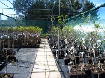 Prodej okrasných a užitkových rostlin, Subtropické zahradnictví Kruh Pavel Beran