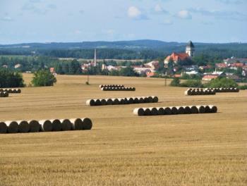 Zemědělské družstvo Hříšice, rostlinná a živočišná výroba, Zemědělské družstvo Hříšice