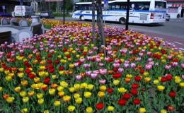 Údržba a péče soukromé, veřejné zeleně - sekání parků, kácení stromů Hodonín