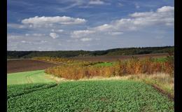 Obnovy krajinných struktur