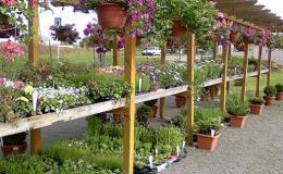 Prodej rostlin v zahradnictví