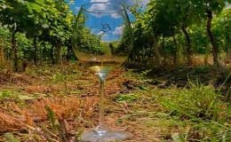 Vinárna, vinné sklepy v Čejkovicích - Vinařství Petr Bíza