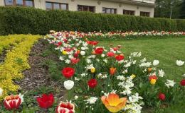 Prodej směsí květin cibulovin pro parky
