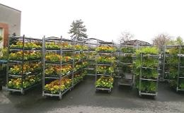 Prodej zeleninové sadby