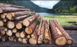 Těžba a přibližování dřeva
