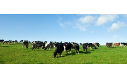 Veterinární léčiva a krmné směsi pro malá  hospodářská zvířata.