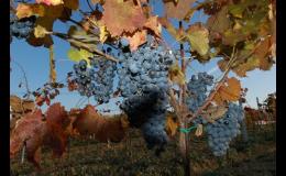 Vinařství, výroba a prodej vína, kvalitní víno