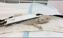 Specializujeme se na malá, velká i exotická zvířata