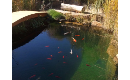 jezírko na odchov ryb