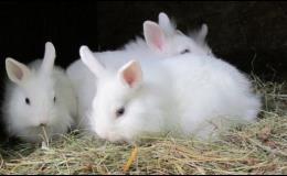 Základy ve výživě zakrslých králíků