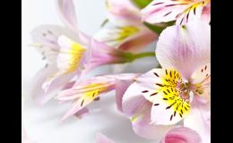 Vazba květin