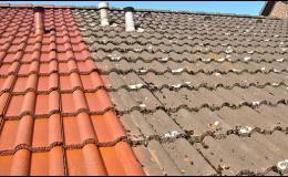 Zbavíme střechu řas, mechů a plísní