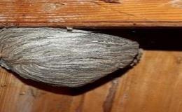 Hubení nechtěného, škodlivého hmyzu Znojmo, Moravský Krumlov