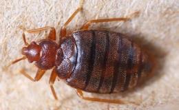 Dezinsekce, likvidace nebezpečného hmyzu Znojmo, Moravský Krumlov