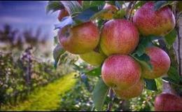 Ovocné stromy všech druhů pořídíte v Zahradním centru Morávkovo v Lednici