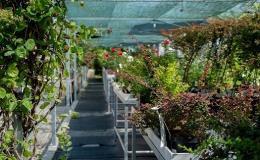 V Zahradním centru Morávkovo v Lednici nakoupíte vše potřebné pro Vaši zahradu