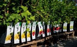 Nakupujte ovocné dřeviny, listnaté i jehličnaté rostliny a vzrostlé stromy v Zahradním centru Morávkovo v Lednici