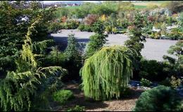 Zahradnictví Brno Kresa - prodej okrasných stromků, keřů, rostlin