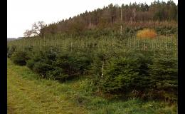 Prodej a plantáž živých vánočních stromků Střítež nad Bečvou