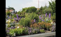 Zahradnictví - zahradní centrum, maloobchod a velkoobchod s květinami, trvalkami a okrasnými dřevinami